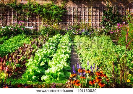 free vegetable garden vegetable garden stock images royalty free images