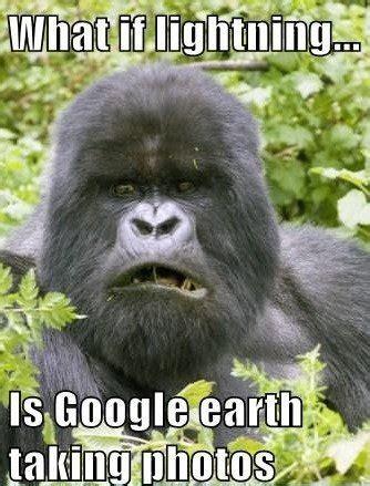 Funny Gorilla Meme - funny gorilla meme