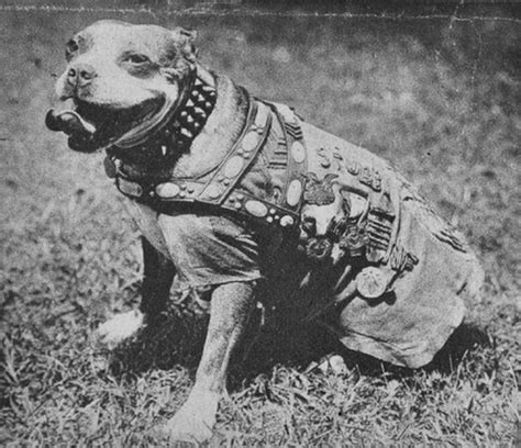Sergeant Stubby Sergeant Stubby Will Change The Way You Look At Your