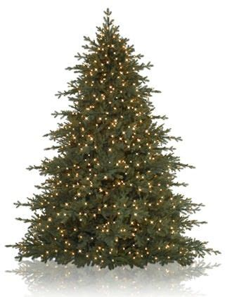majestic spruce christmas tree sugarlands spruce wide tree real tree