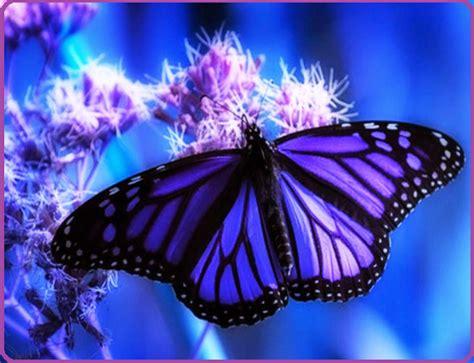 imagenes mariposas rosas reales mariposas de colores ex 243 ticos para disfrutar imagenes de