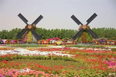 Miracle Garden In Dubai World S Largest Botanical Garden Largest Botanical Garden In World