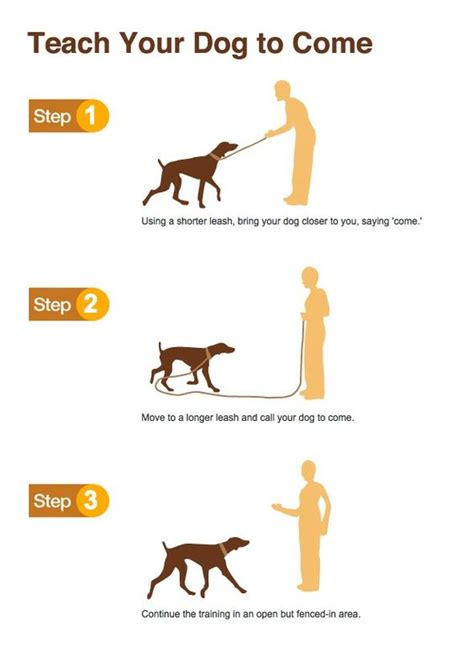 puppy commands embedded image diy your sons and commands