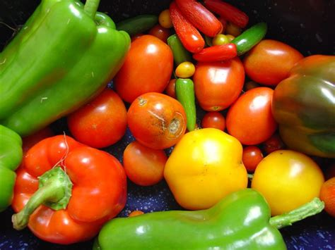colorful vegetables file colorful photo of vegetables png