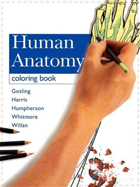 anatomy coloring book by mosby 404 squidoo page not found