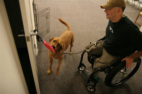 how do they service dogs service services and tasks service certifications