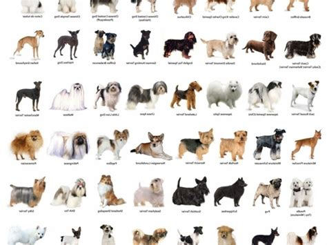 names of dogs names of small breed dogs pictures to pin on pinsdaddy