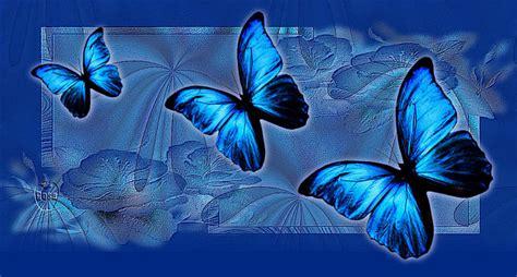 imagenes mariposas de colores brillantes mariposas de colores brillantes con movimiento imagui