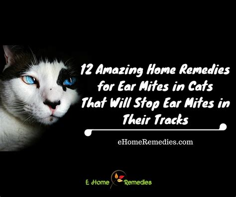 12 amazing home remedies for ear mites in cats that will