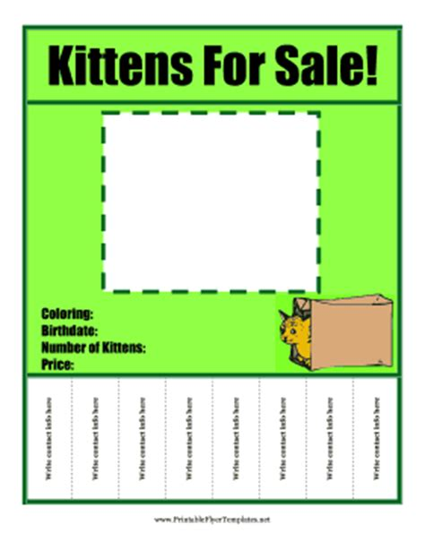 Kittens For Sale Flyer For Sale Flyer Template With Tabs