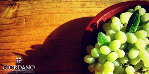 uva da tavola nera uva da tavola rossa o nera giordano vini