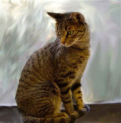 cats kittens diy  images  pinterest