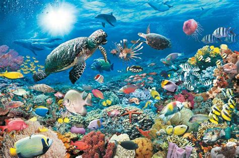 imagenes de la vida bajo el mar underwater tranquility jigsaw puzzle puzzlewarehouse com