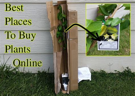 best online garden nursery thenurseries