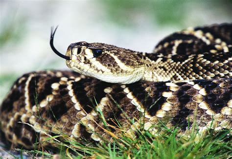 7 Most Poisonous Animals by The Most Venomous Animals On Earth Ranked Page 23 Cnet