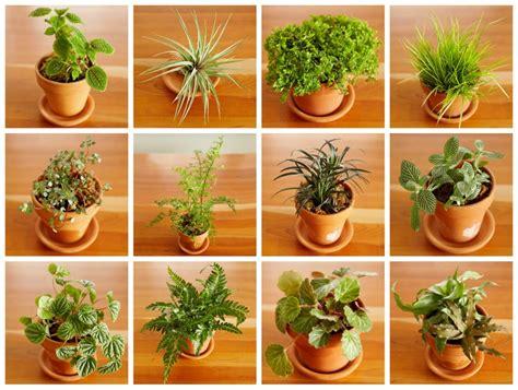 best plants for closed terrariums terrarium garden gardening terrarium