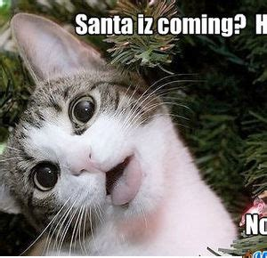 christmas cat memes meme center ragefreak profile
