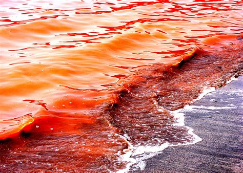 red seas under red the red tide alana olendorf e port