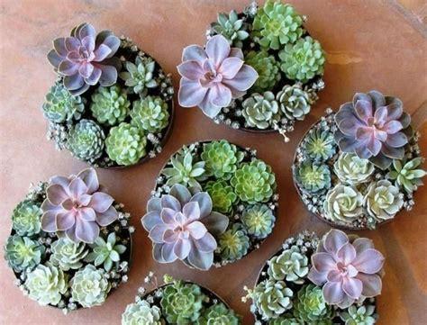 decorar con plantas suculentas decorar con plantas suculentas plantas