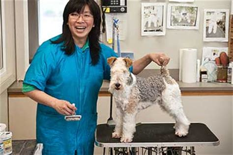 grooming seattle and cat boarding daycare grooming seattle