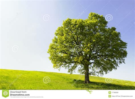 A Frame Plans Free Single Tree On Hill Royalty Free Stock Photos Image