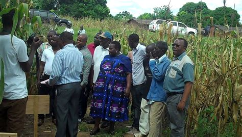 members food improved maize fights drought in malawi cimmyt international maize and wheat