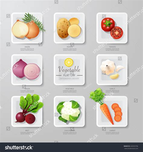 vegetables used in food infographic food vegetables flat lay idea stock vector