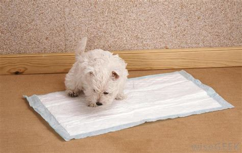 how to potty a puppy in an apartment how to potty a puppy in an apartment 10 steps listeve