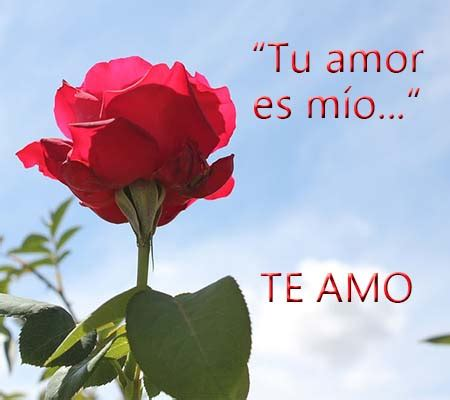 imagenes de rosas para mi novia rosas de amor para mi novio rosas de amor