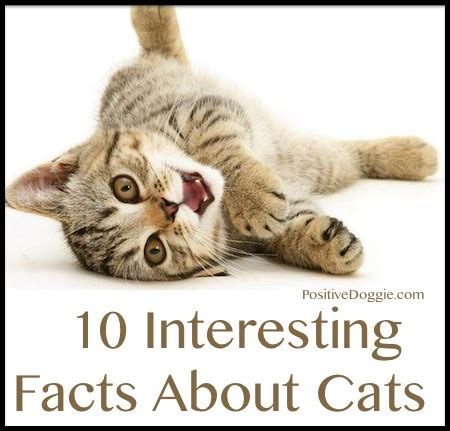 10 interesting facts about cats