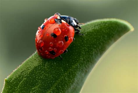 macro photography wallpapers high quality