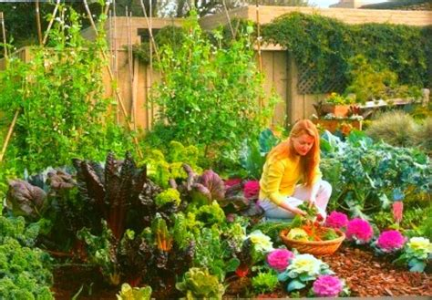 Can You Eat On The Arden S Garden 2 Day Detox by Vegetable Garden Vegetable Gardening Tips And Planting A