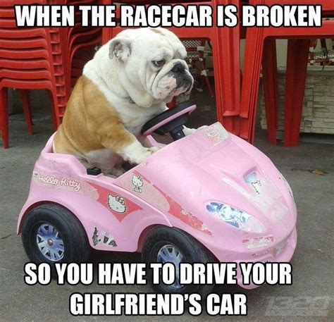 Broken Car Meme - 20 cute and funny bulldog memes sayingimages com