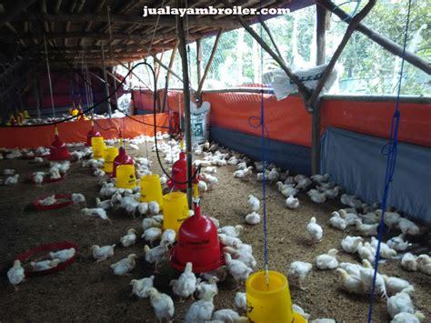 Jual Bibit Ayam Broiler Di Medan jual ayam broiler di bintara jual ayam broiler
