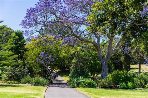 Sydney Botanical Gardens Opening Hours 15 Awesome Free Things To Do In Sydney Nomadasaurus Adventure Travel