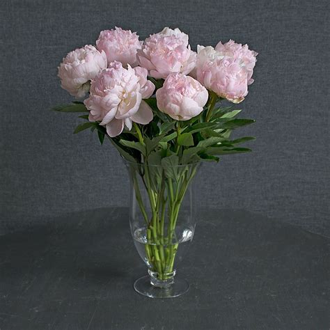 peonies bouquet blush pink peony bouquet white flower farm