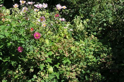 e giardini rivista riviste segnalazioni giardini in viaggio part 2