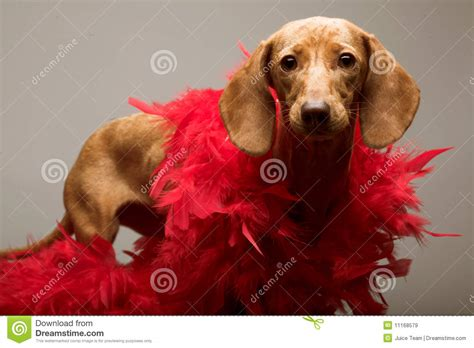 puppy rate puppy rate royalty free stock images image 11168579