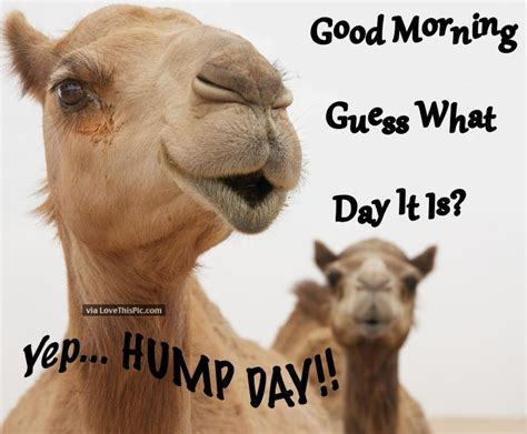 Funny Hump Day Memes - good morning guess what day it is yep hump day quotes
