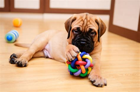 puppy day home what to expect your puppy s day home