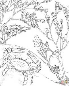blue crab coloring page blue crab coloring page free printable coloring pages
