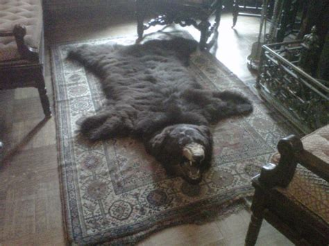 25 best ideas about skin rug on rug