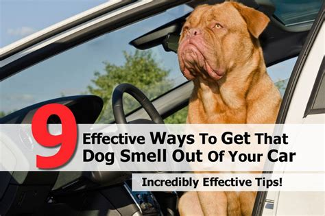 getting rid of dog smell in house 9 effective ways to get that dog smell out of your car