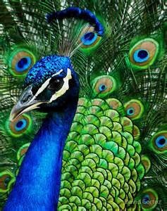 peacock blue hue ology your weekly color inspiration peacock blue