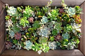 Glass Floral Vases Great Ways To Celebrate With Succulents
