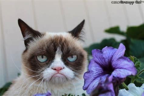 Surprised Cat Meme - surprised cat memes image memes at relatably com