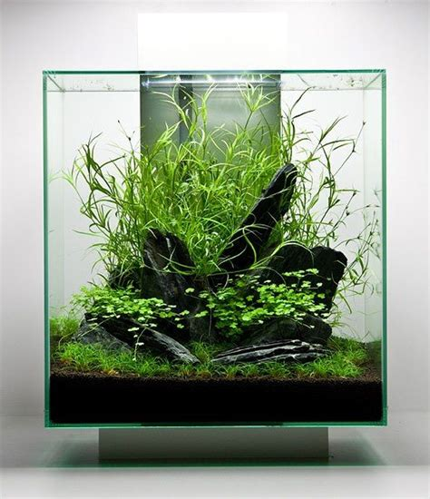 Fluval Edge Aquascape by Fluval Edge Aquascape By Oliver Knott Aquatic