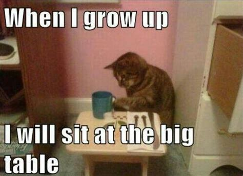 Cat Sitting At Table Meme - how we all feel as kids at thanksgiving crazy cat lady pinterest