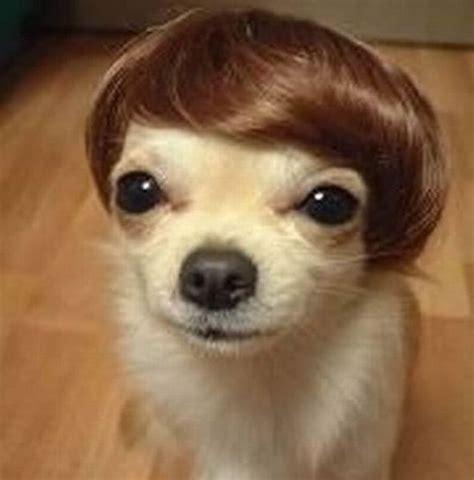 hilarious dogs hilarious haircuts 49 pics izismile