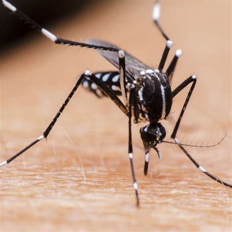 how to get rid of mosquitoes naturally how to get rid of mosquitoes planet